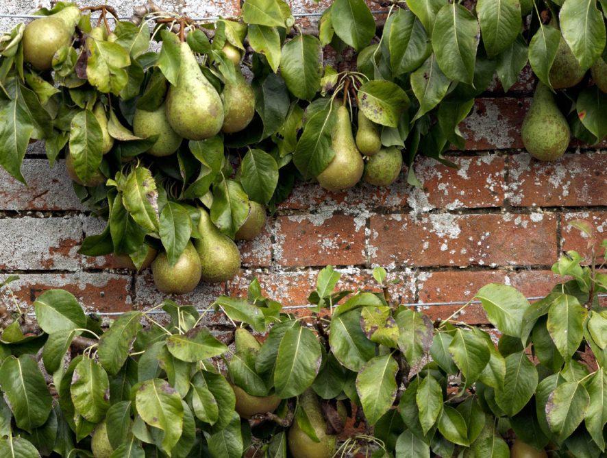 warm wall - great fruit