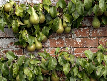 warm wall - great fruit